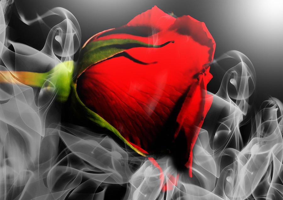 Passionate Red Hot Smoky Rose Photograph By Georgiana Romanovna