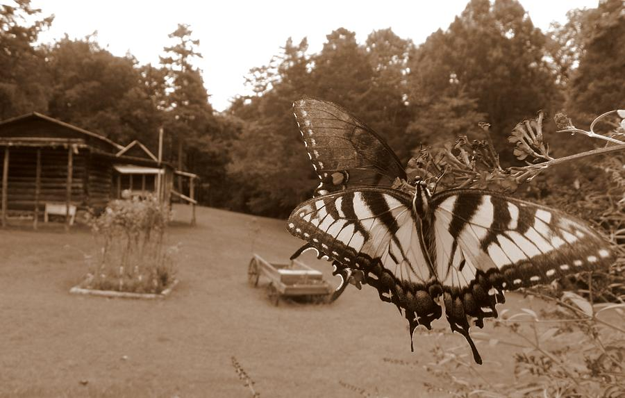 Butterfly Photograph - Past And Present  by Kim Galluzzo Wozniak