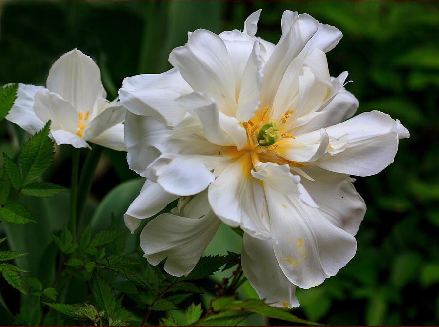 Past the Bloom by Robert Pilkington