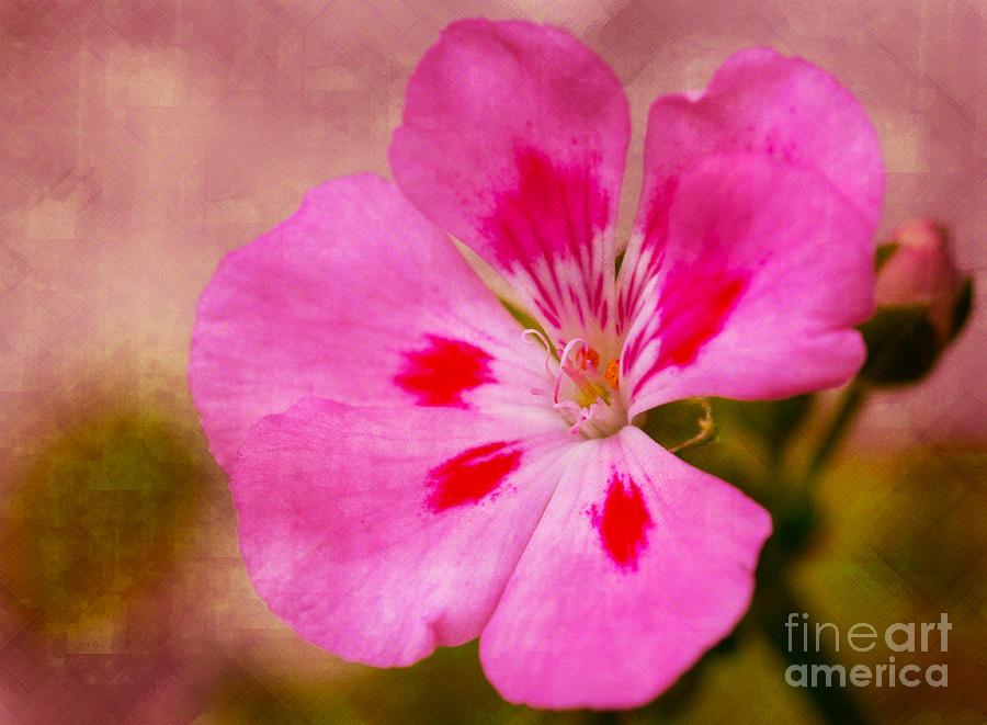 Art Prints Photograph - Pastel Beauty by Dave Bosse