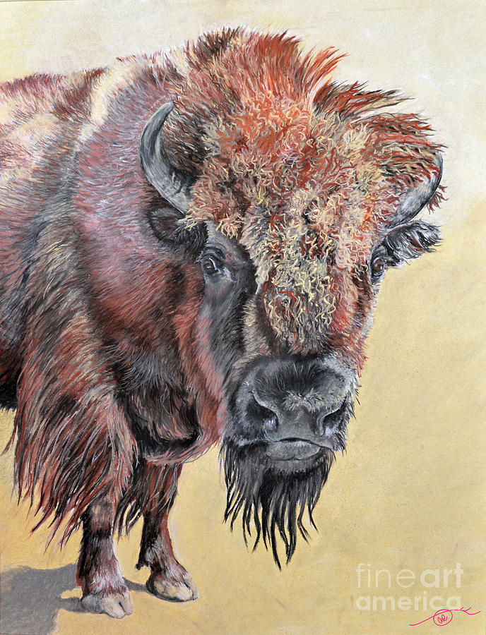 Pastel Pastel - Pastel Buffalo Stare by Ann Marie Chaffin