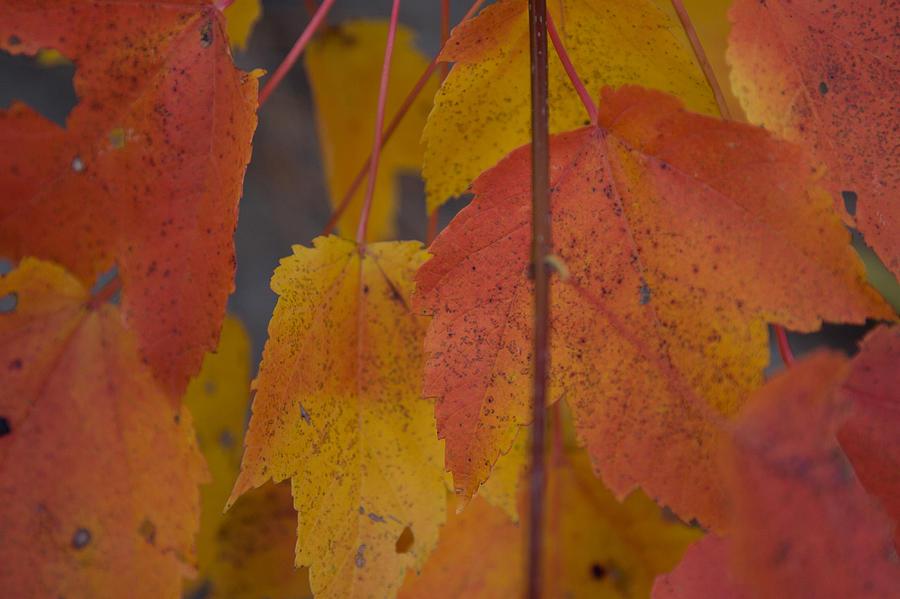 Salem Photograph - Pastel Colors Of Autumn by Jeff Folger