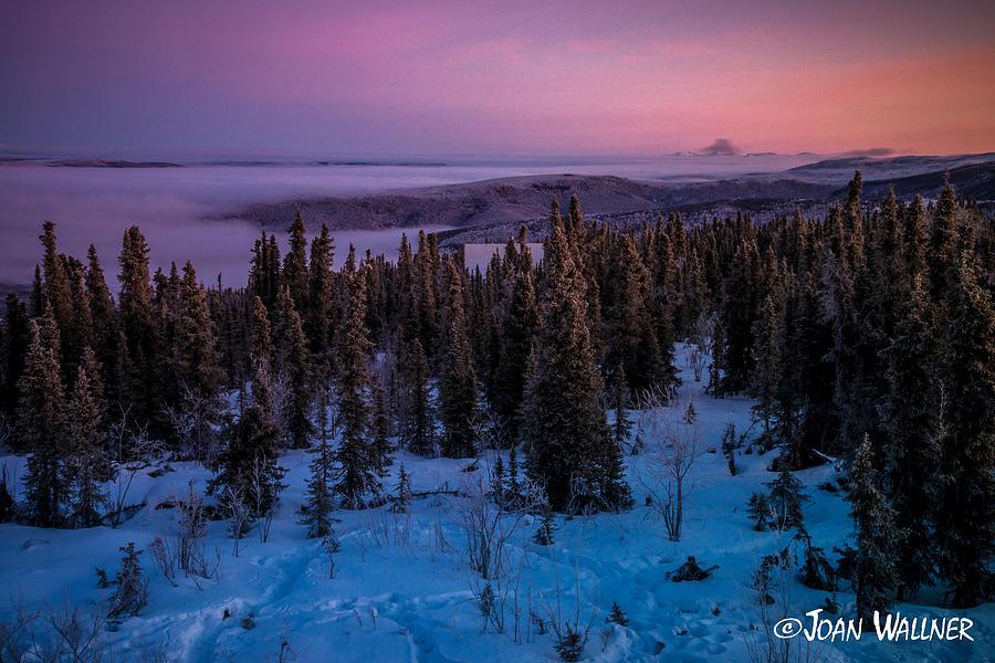 Alaska Photograph - Pastel Winter Sunrise by Joan Wallner