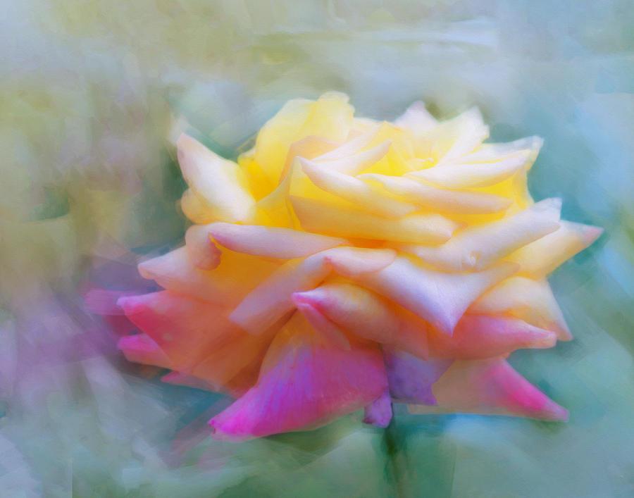 Vibrant Photograph - Pastelacious Rose by Hal Halli