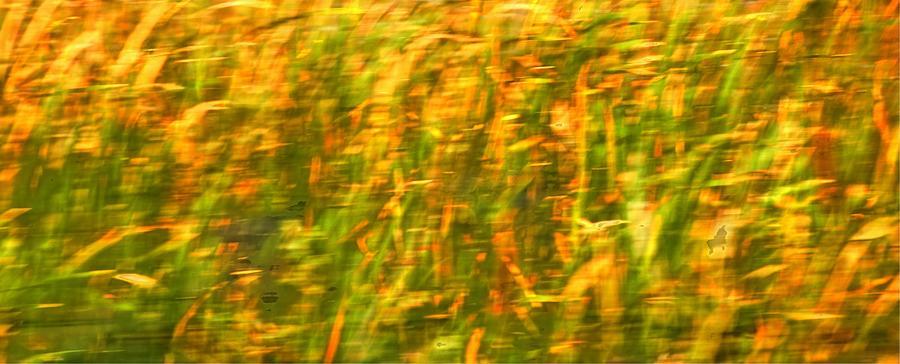 Pasture 16690 Photograph