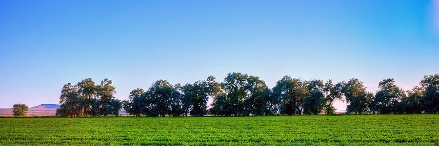 Pasture Tree Line Summer 15798 Photograph