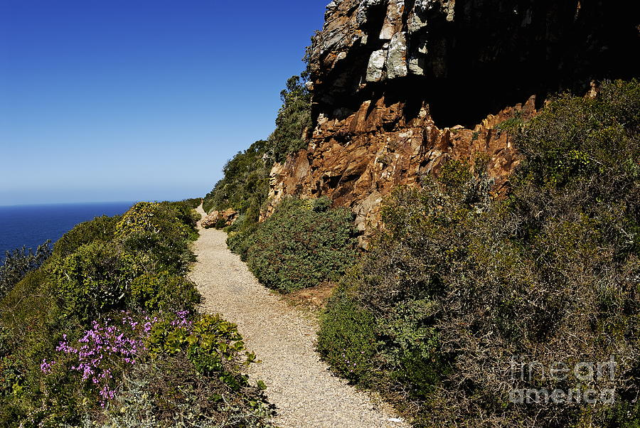 Toughness Photograph - Path At Cape Of Good Hope by Sami Sarkis