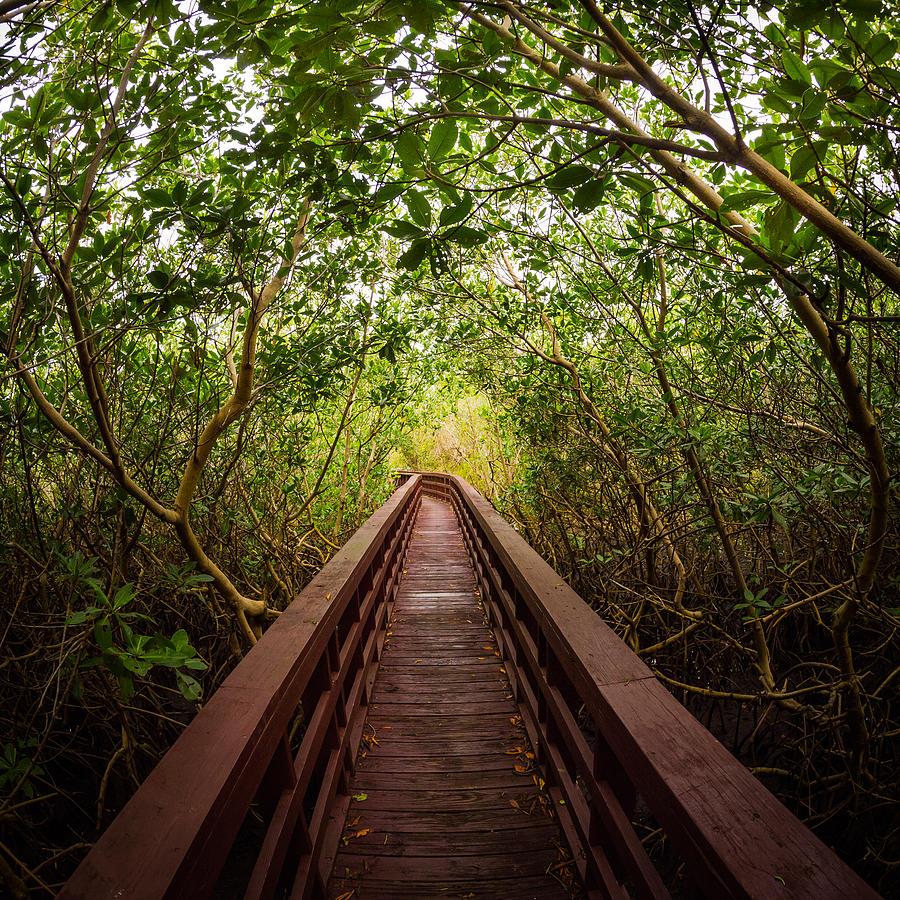Mangrove Photograph - Path by Carl Engman