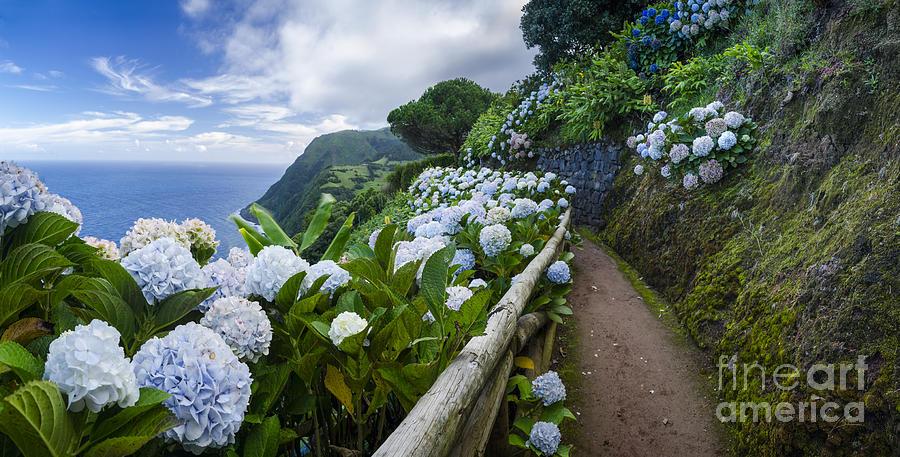 Azores Photograph - Path Hydrangea by N R