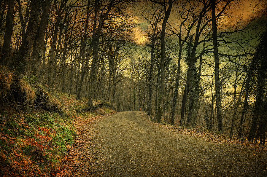 Woods Photograph - Path IIi by Taylan Apukovska