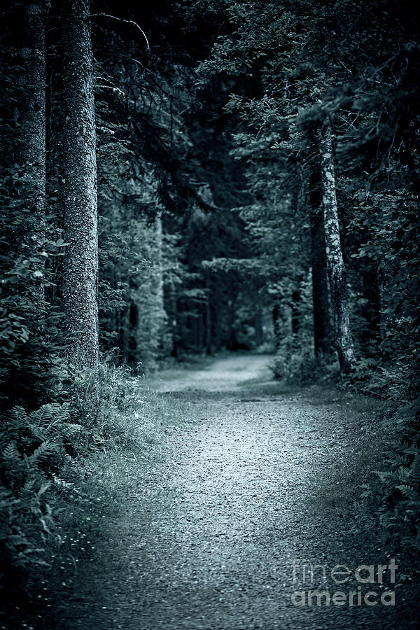 path in night forest photograph by elena elisseeva