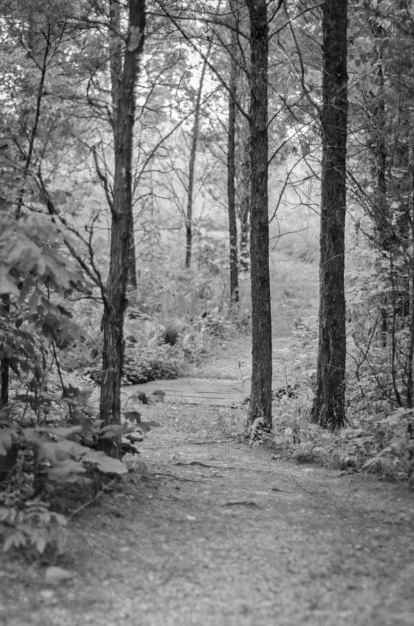 Trees Photograph - Path in the Foggy Forest by Diana Boyd