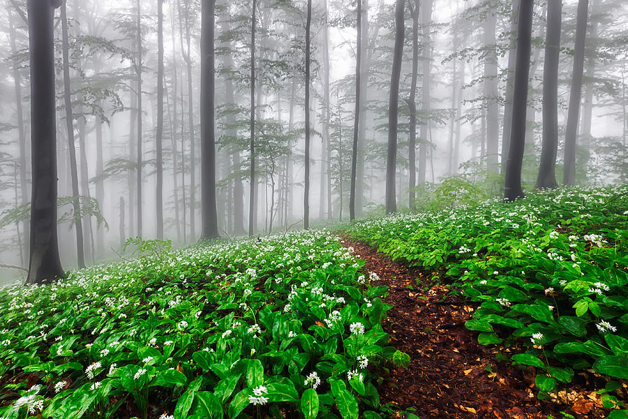 Balkan Mountains Photograph - Path In The Mist by Evgeni Dinev