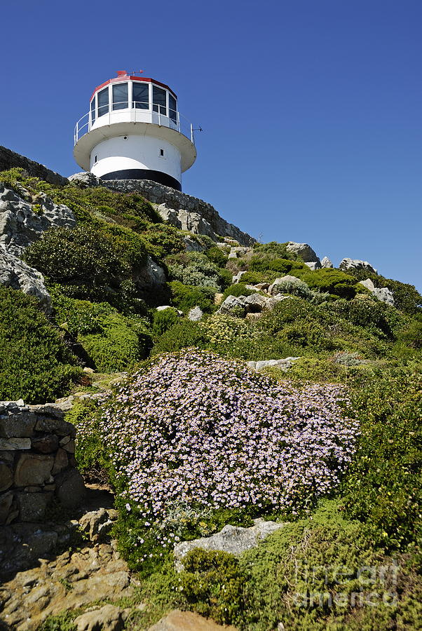 Safety Photograph - Path Leading To Lighthouse At Cape Point by Sami Sarkis