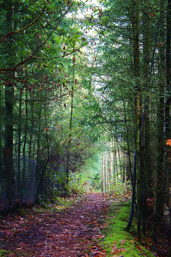 Trees Photograph - Path Of Adventure by Bruce Bley