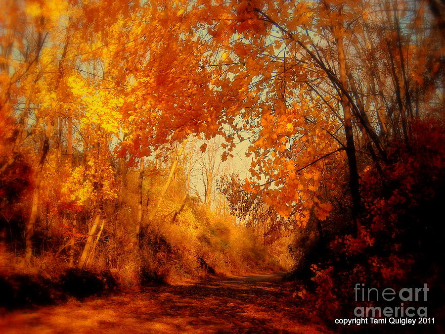 Path Photograph - Path Of Gold by Tami Quigley