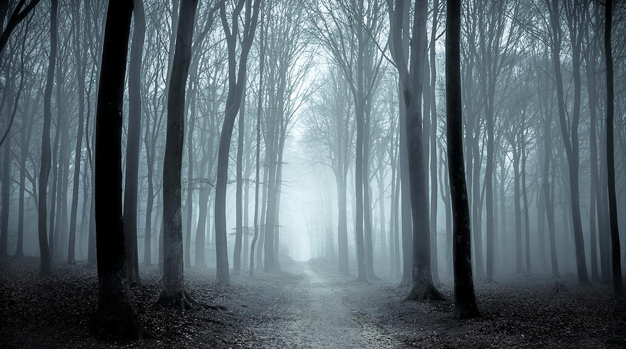 Path Through A Misty Forest During A Foggy Winter Day Photograph by Sjo
