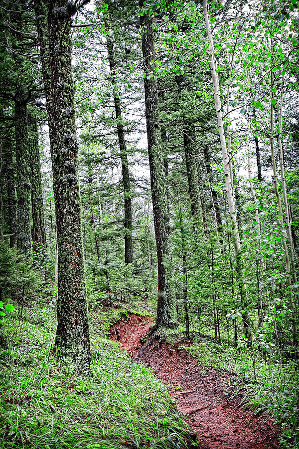 Forest Photograph - Path Through A Peaceful Mountain Forest by Lincoln Rogers