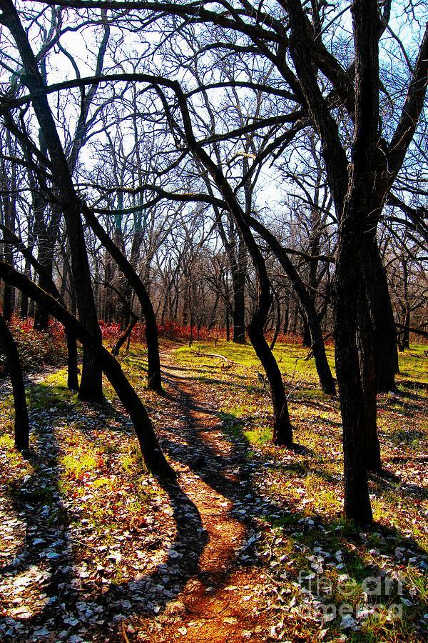 Park Photograph - Path Thru The Oaks by David Taylor
