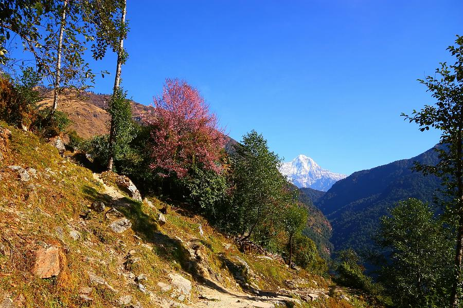 Annapurna Photograph - Path To The Mountains by FireFlux Studios