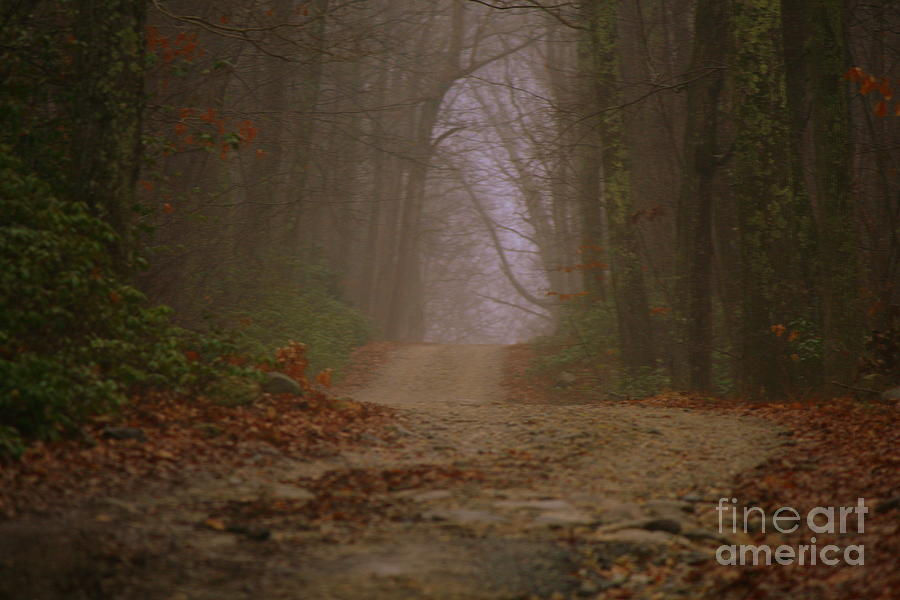 Country Road Photograph - Path To Wolf Den  by Neal Eslinger