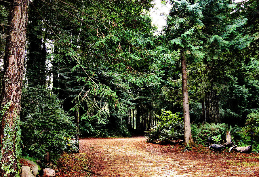 California Photograph - Pathway In The Forest by Rafael Escalios