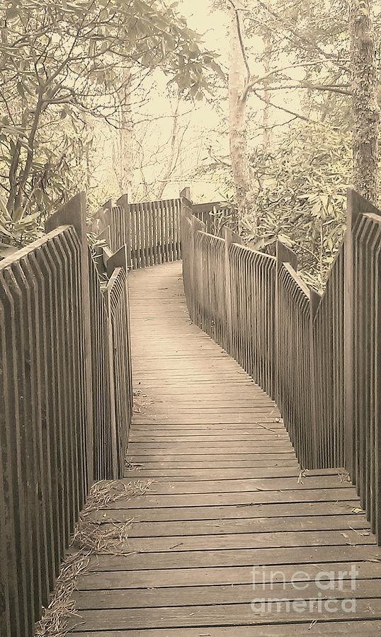 Boardwalk Photograph - Pathway by Melissa Petrey