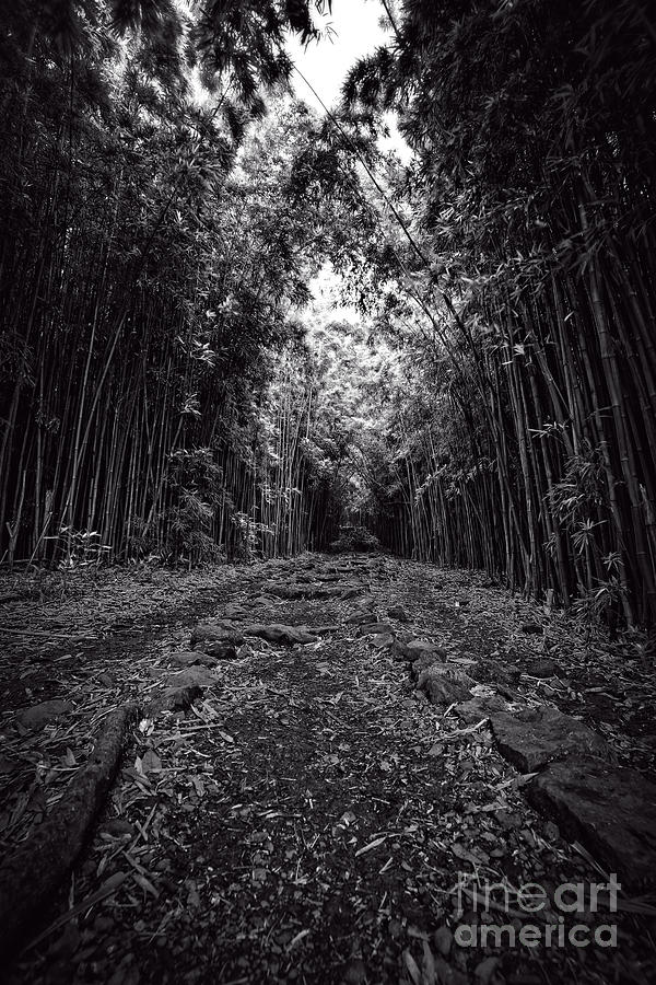 Hawaii Photograph - Pathway Through A Bamboo Forest Maui Hawaii by Edward Fielding