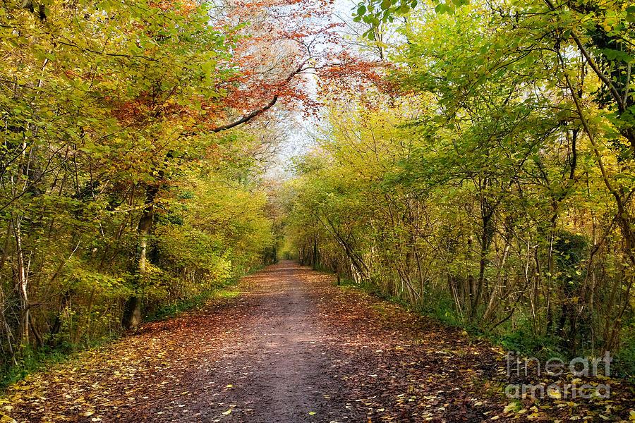 Leaf Photograph - Pathway Through Sunlit Autumn Woodland Trees by Natalie Kinnear