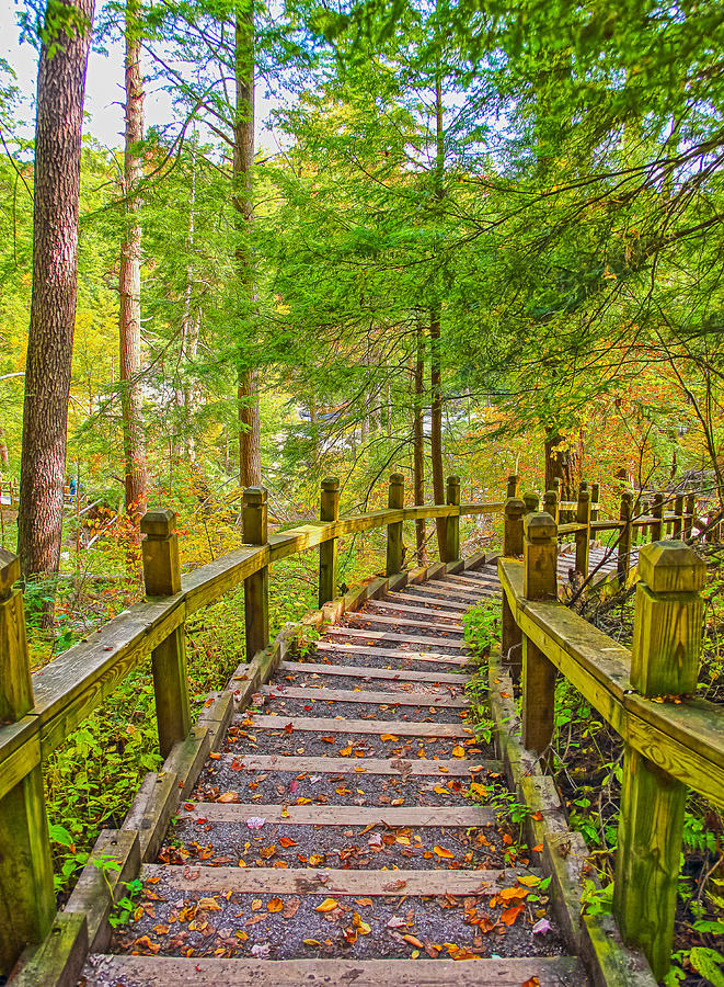 Swallow Falls State Park Photograph - Pathway To The Falls  by SCB Captures