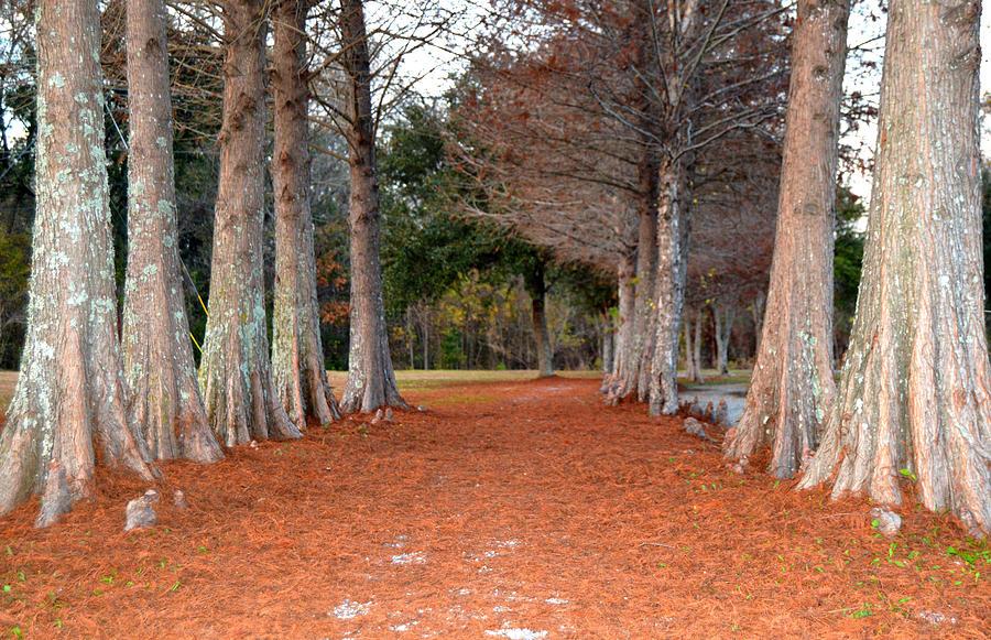 Pathways Photograph