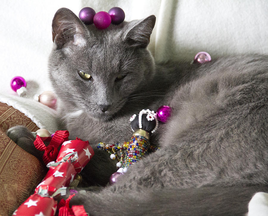 Baubles Photograph - Patience by Debbie Cundy