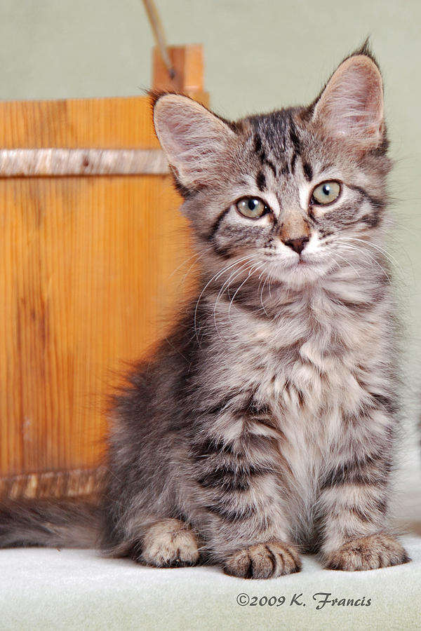 Kitten Photograph - Patience by Kenny Francis