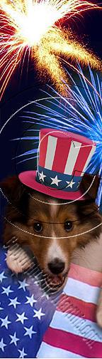 Bookmark Photograph - Patriotic Sheltie  # 497 by Jeanette K