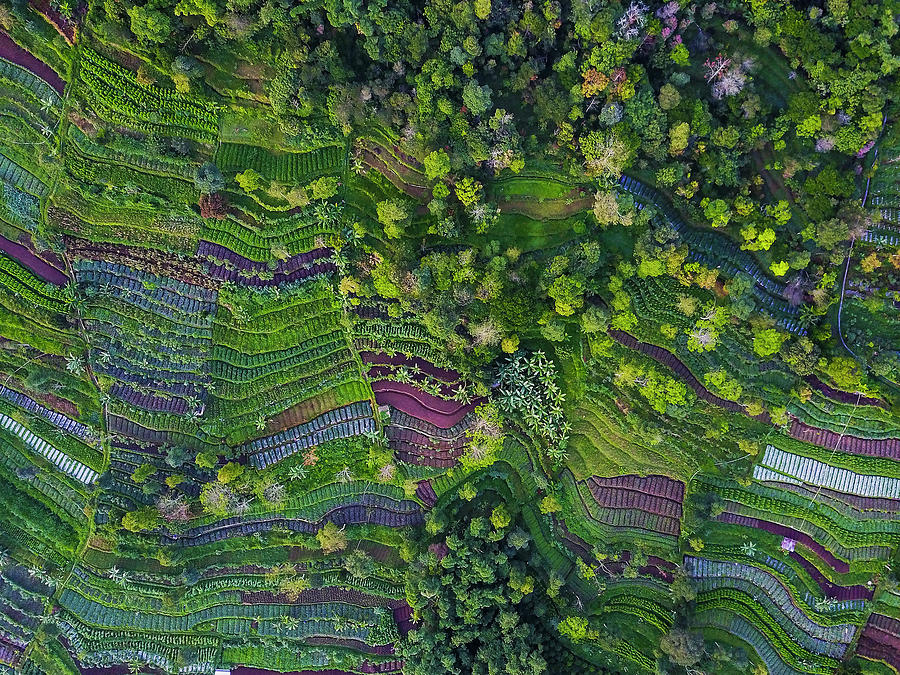 Aerial Photograph - Pattern by Farid Yuwono