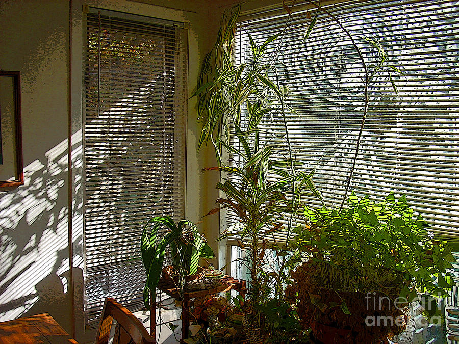 Plants Photograph - Patterns in Light Through Dining Room Window by Beebe  Barksdale-Bruner