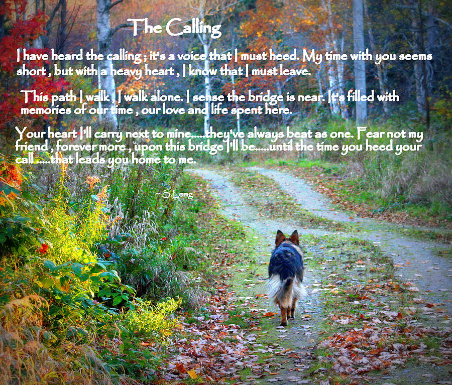 Quotes Photograph - Paw Prints The Calling by Sue Long