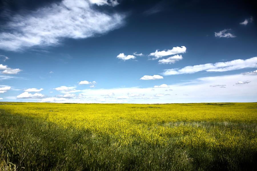 Pawnee Grasslands Photograph by Shane Bechler