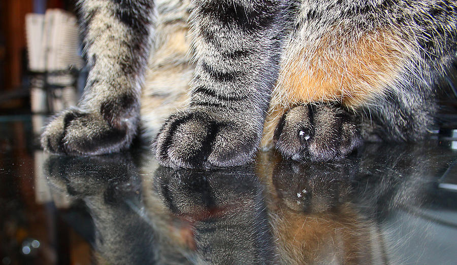 Paws Photograph by Dart and Suze Humeston