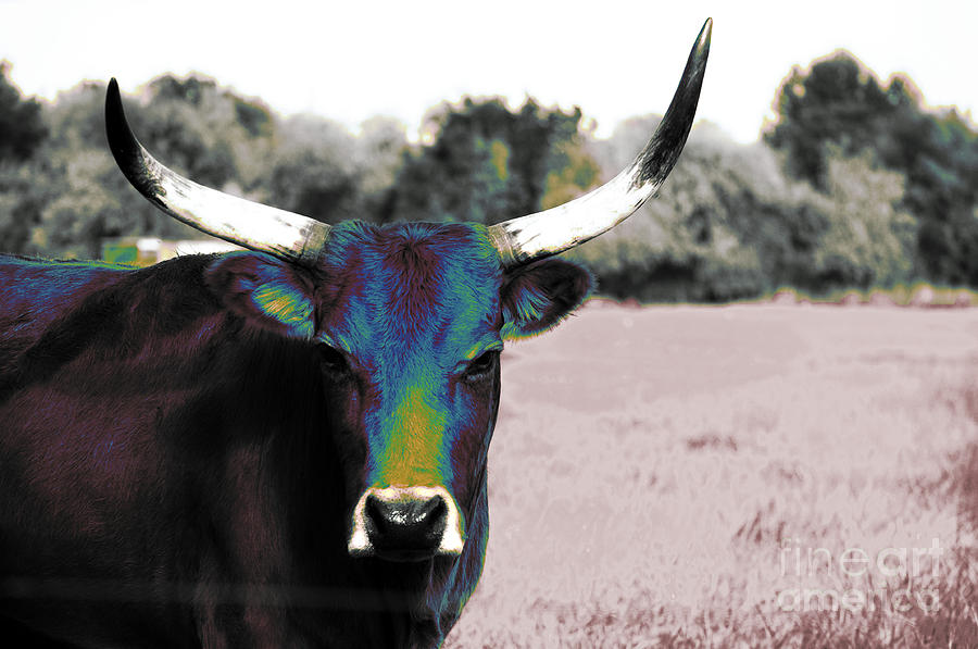 Bull Photograph - Pazzo by Molly McPherson