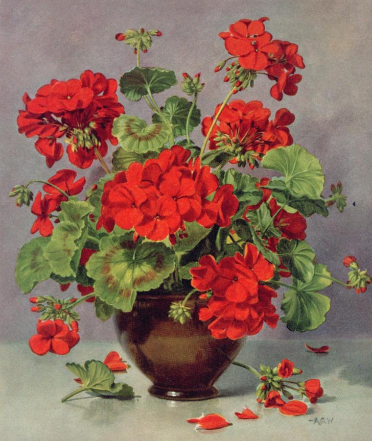 Geranium Painting - Geranium In An Earthenware Vase by Albert Williams