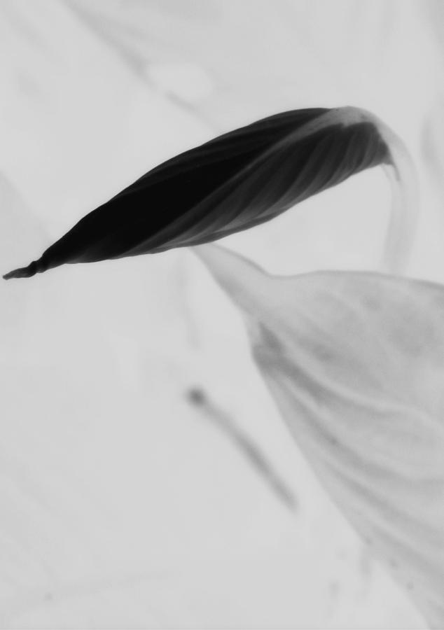 Flower Photograph - Peace Lily  by Tara Miller