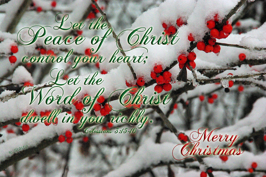 Holly Photograph - Peace Of Christ Holly by Robyn Stacey
