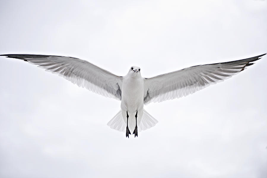 Seagull Photograph - Peace On Earth  Good Will To Men by Bonnie Barry