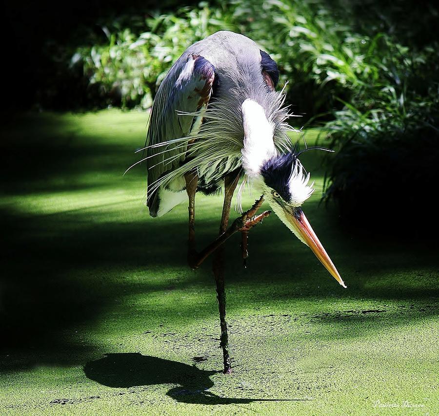 Great Blue Heron Photograph - Peace by Paulette Thomas
