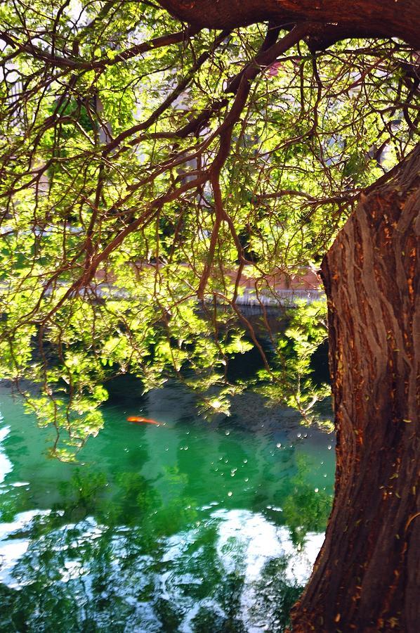 Peaceful 28843 Photograph