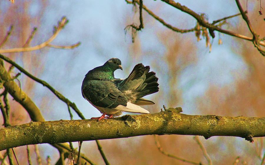 Nature Photograph - Peaceful And Beautiful by Valia Bradshaw
