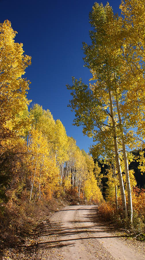 Aspen Photograph - Peaceful Fall Road by Michael J Bauer