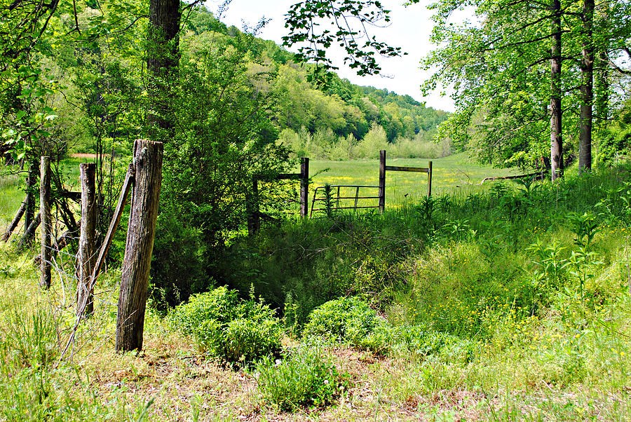 Farm Photograph - Peaceful Field by Stephanie Grooms