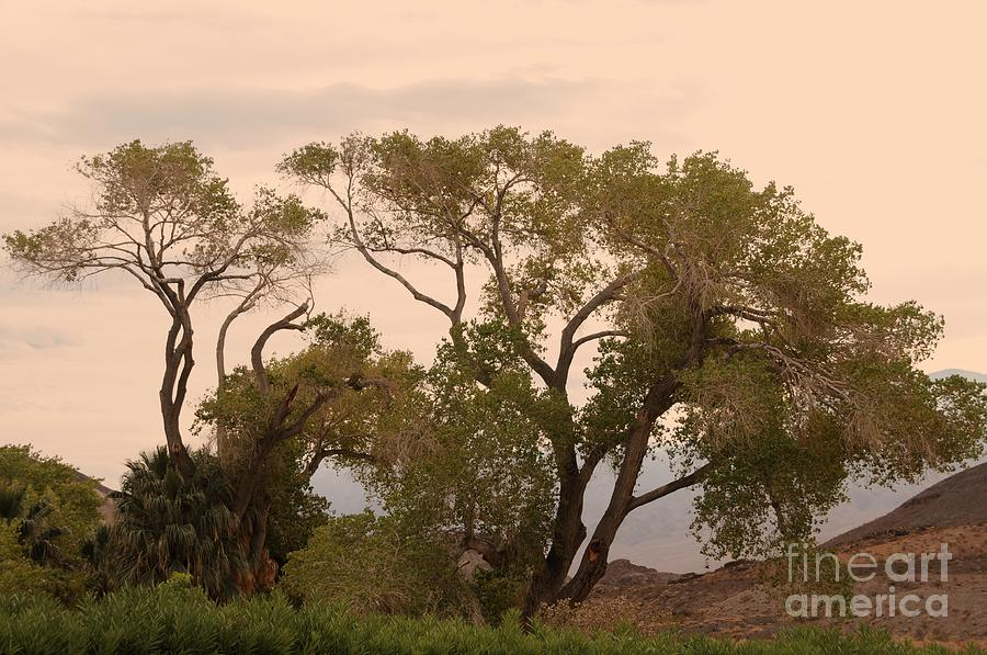 Trees Photograph - Peaceful by Kathleen Struckle